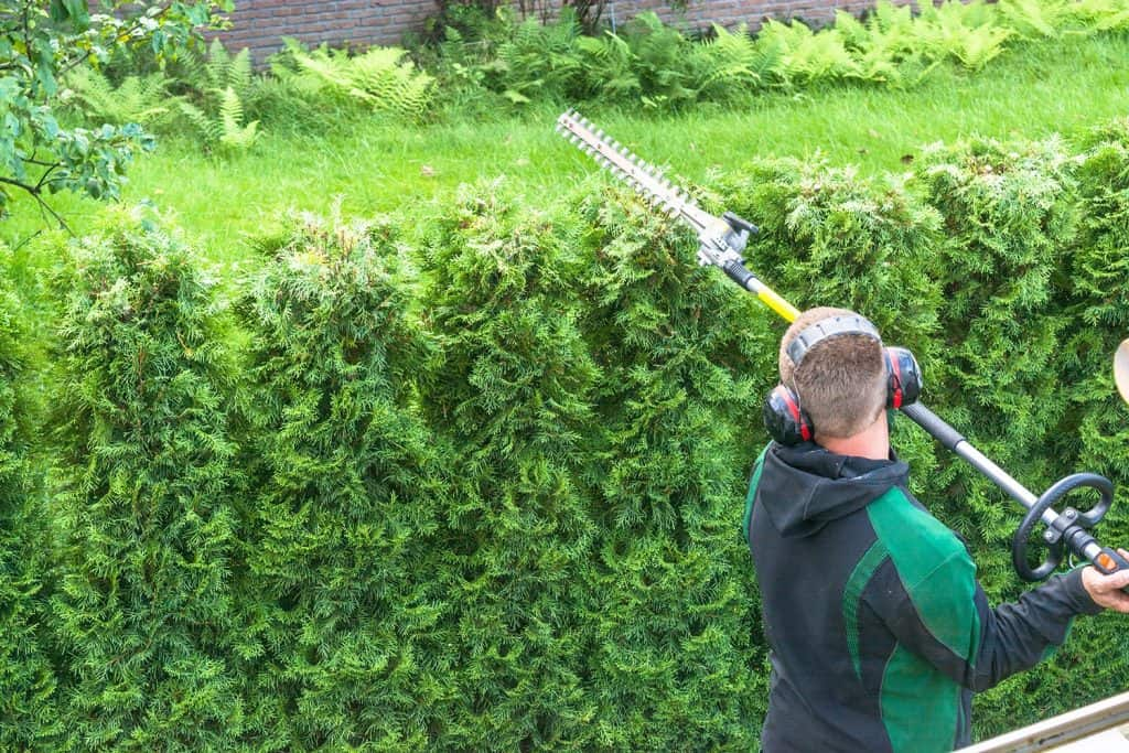 Professional hedges cutting with gasoline telescopic hedge trimmer