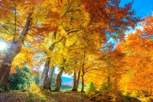 Read more about the article Do Maple Trees Flower Every Year?