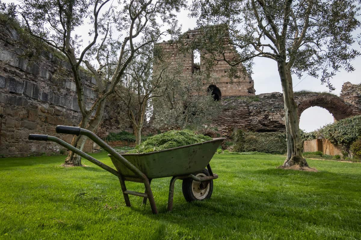 a wheelbarrow of grass clippings in a yard with olive trees, Best Soil And Best Mulch For Dogwood Trees