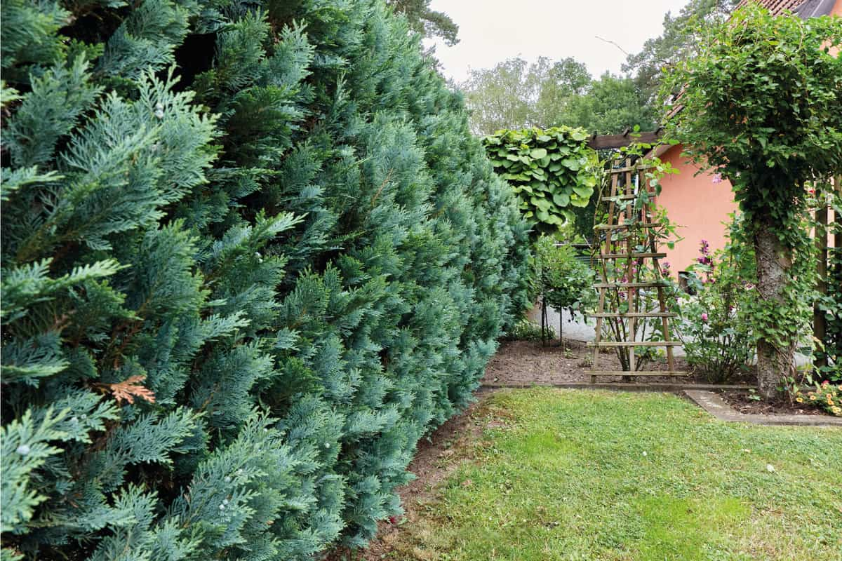 small private house at an overcast morning with thuja hedge
