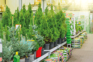 Read more about the article How Long Do Arborvitae Live? [By Type]