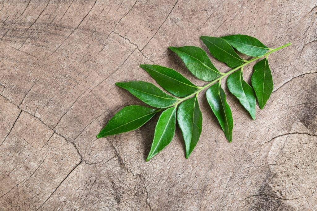 A curry leaf plant on a big wooden chopping board
