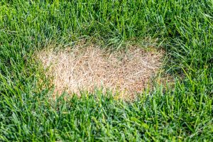Read more about the article Why Is My Grass Dying In Patches?