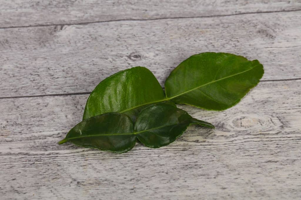 A picked out curry leaf on the table