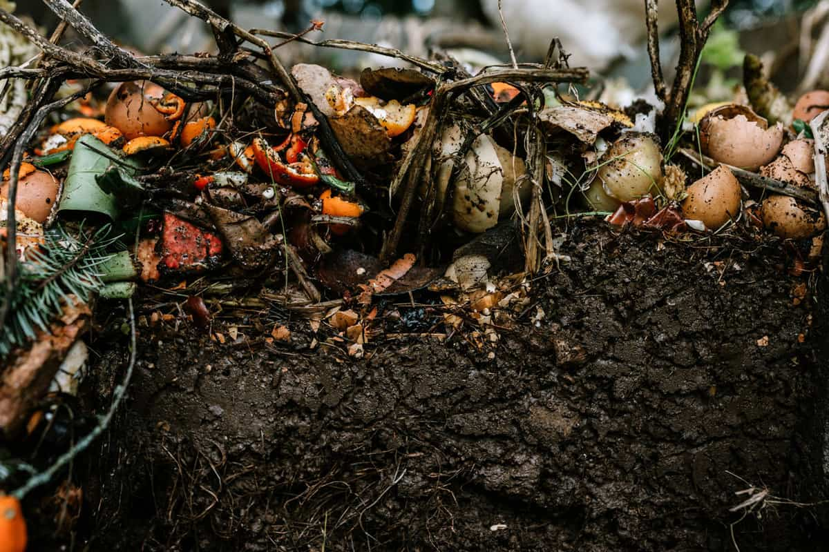 Active Living Backyard Compost Pile With Visible Layers, Does Compost Go On Top Of Soil?