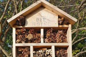 Read more about the article Where To Place A Bee Hotel In The Garden