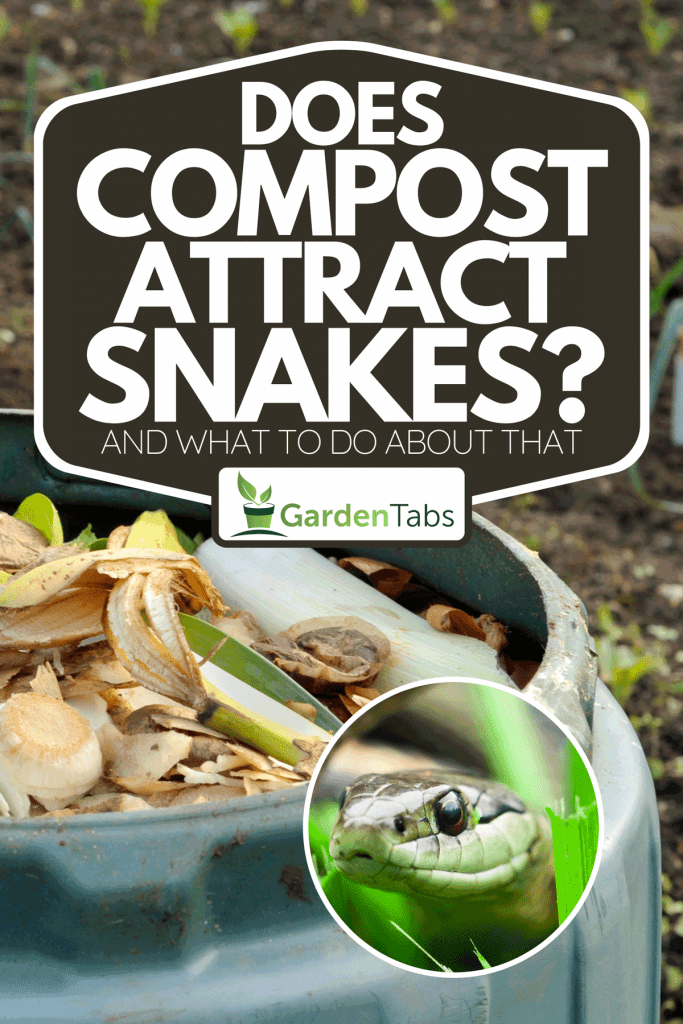 Collage of garden compost bin and a garter snake, Does Compost Attract Snakes? [And What To Do About That]