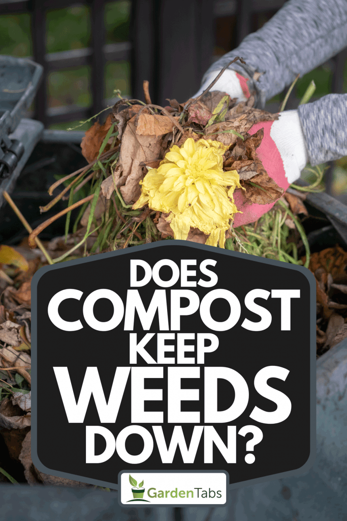 A woman throwing garden waste into compost bin, Does Compost Keep Weeds Down?