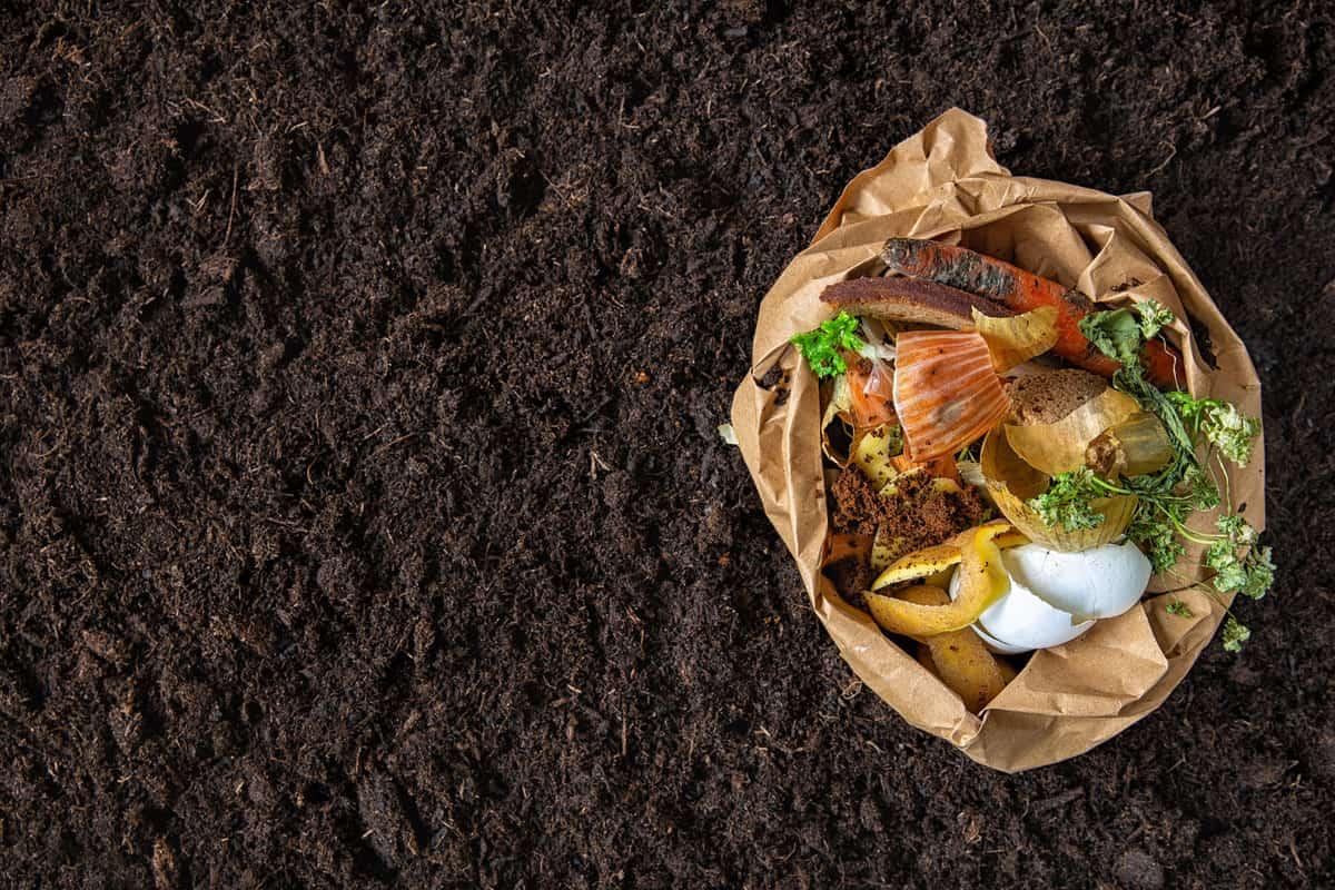 Environmental control.Sorting of food waste in the environmental packages