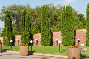 Read more about the article How Far Apart To Plant Arborvitae [By Type]