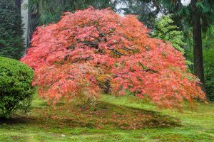 Read more about the article Best Fertilizers For Maple Trees – 4 Different Types To Consider