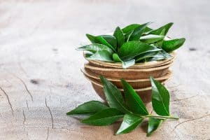 Read more about the article Why Is My Curry Leaf Plant Dying?