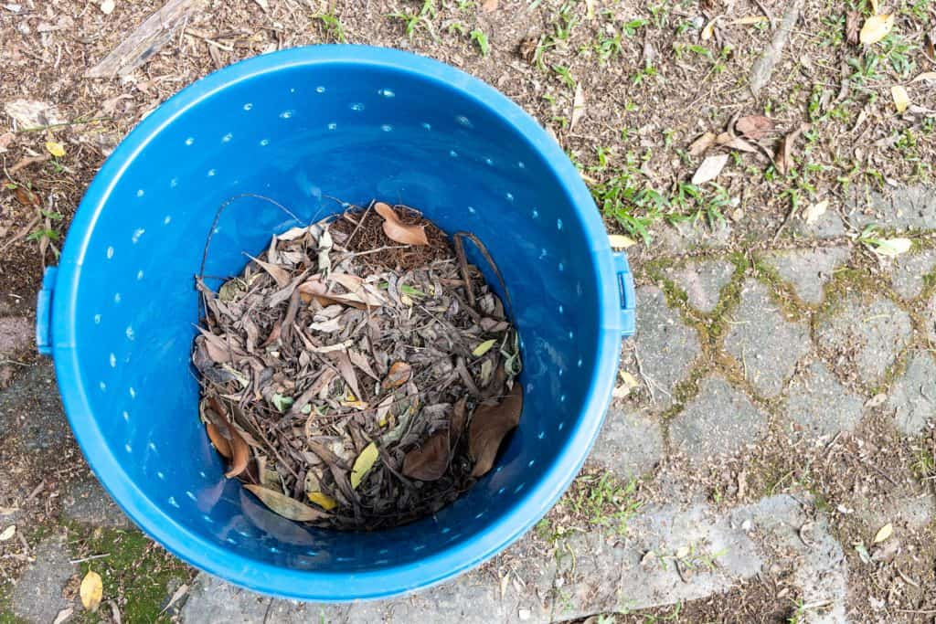 Scooped up leaves inside a blue bucket