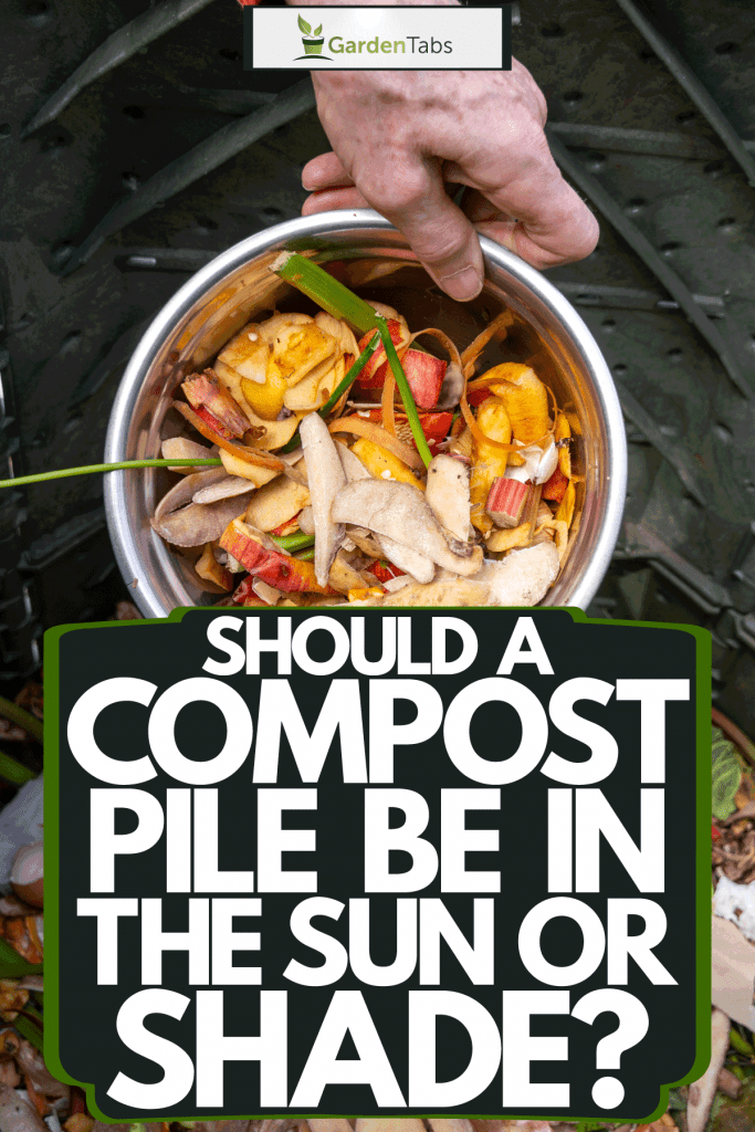 An elderly woman dumping garbage on to the garden bin, Should A Compost Pile Be In The Sun Or Shade?