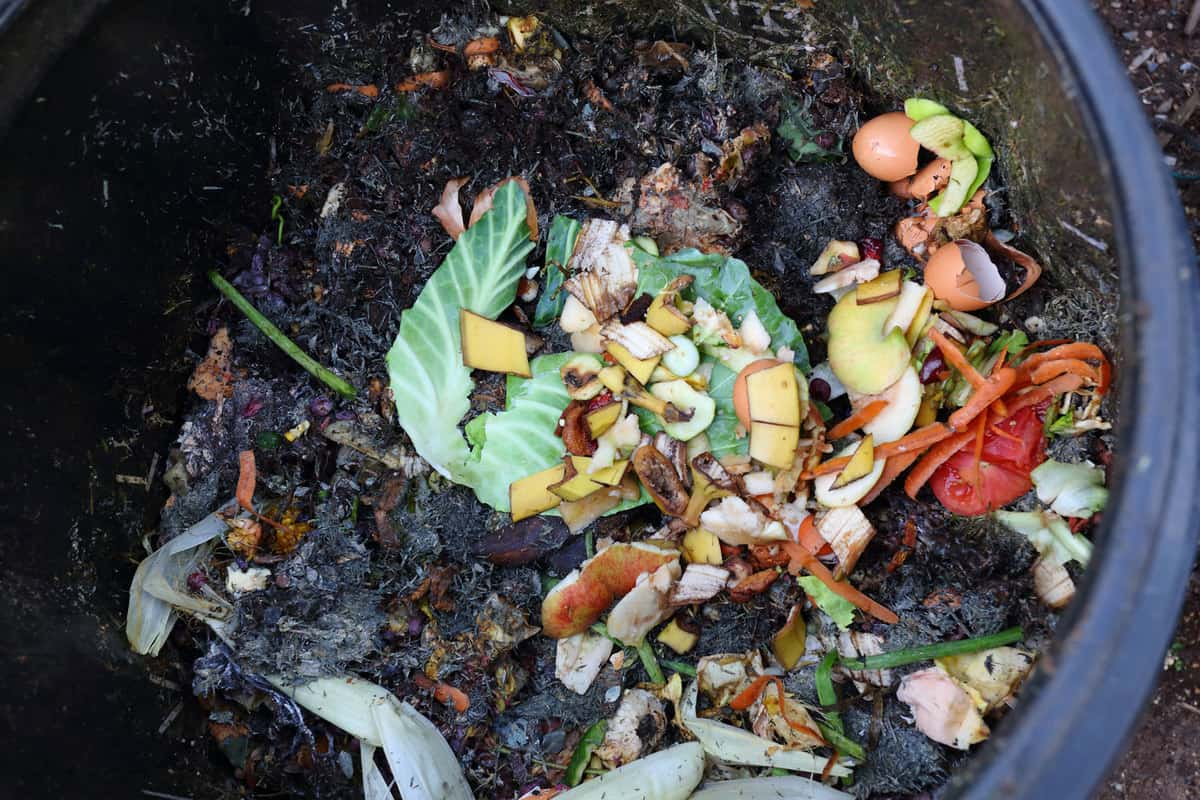 Shredded vegetable and other elements inside a small compost bin, How To Compost In Florida [A Complete Guide]