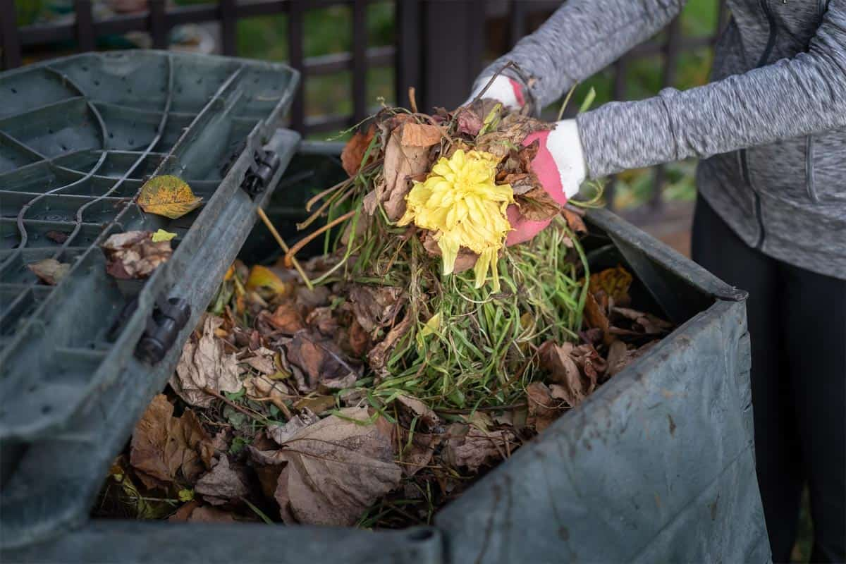 Woman throwing garden waste into compost bin, Does Compost Keep Weeds Down?