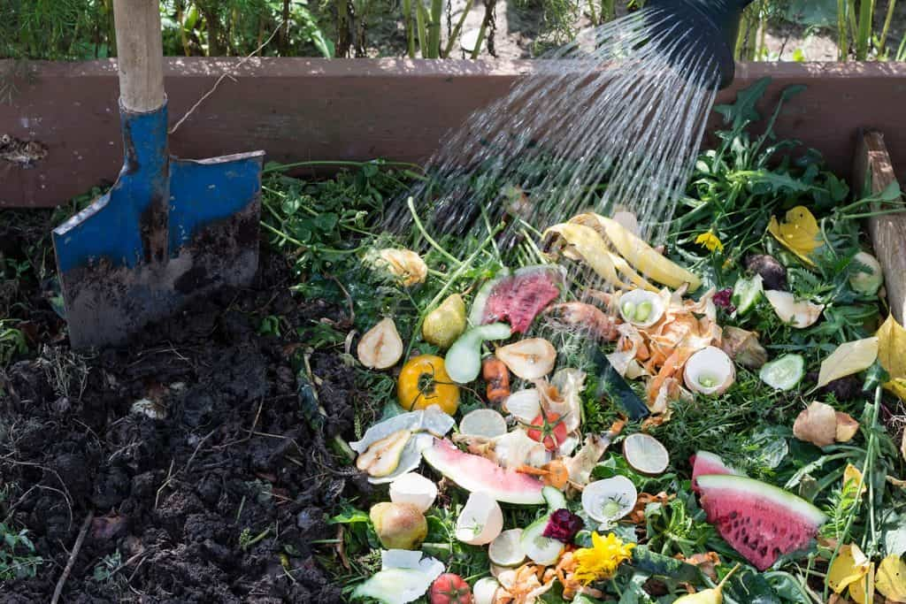 Worker watering compost box outdoors full with garden browns and greens and food wastes