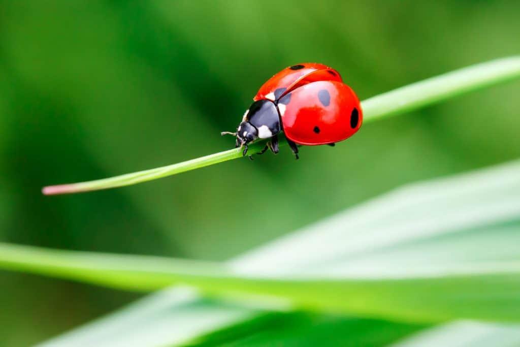 A cute lady bug crawling on the leaf