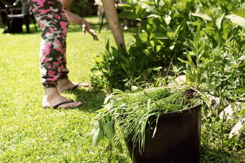 A woman removing weed in the garden