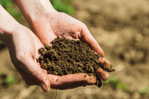 Read more about the article How Much Compost Do You Add To Sandy Soil?