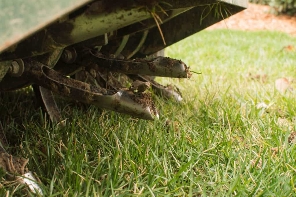 Cure aeration of a fescue lawn