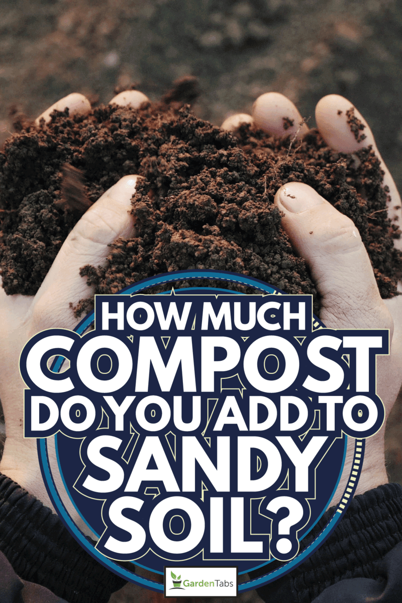 Farmer holding soil in hands close-up. Male hands touching soil on the field. How Much Compost Do You Add To Sandy Soil