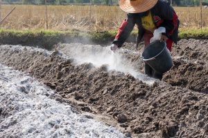 Farmer putting lime to soil, Should You Add Lime To Sandy Soil?