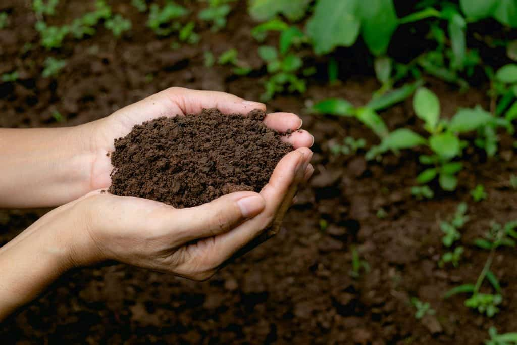 Hand holding fertile soil for plant to growing in nature