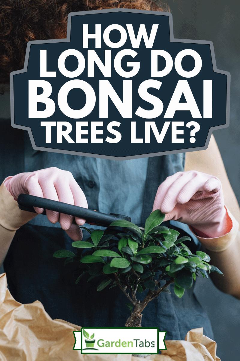 Smiling Woman Gardener Tending to a Bonsai Tree, How Long Do Bonsai Trees Live?