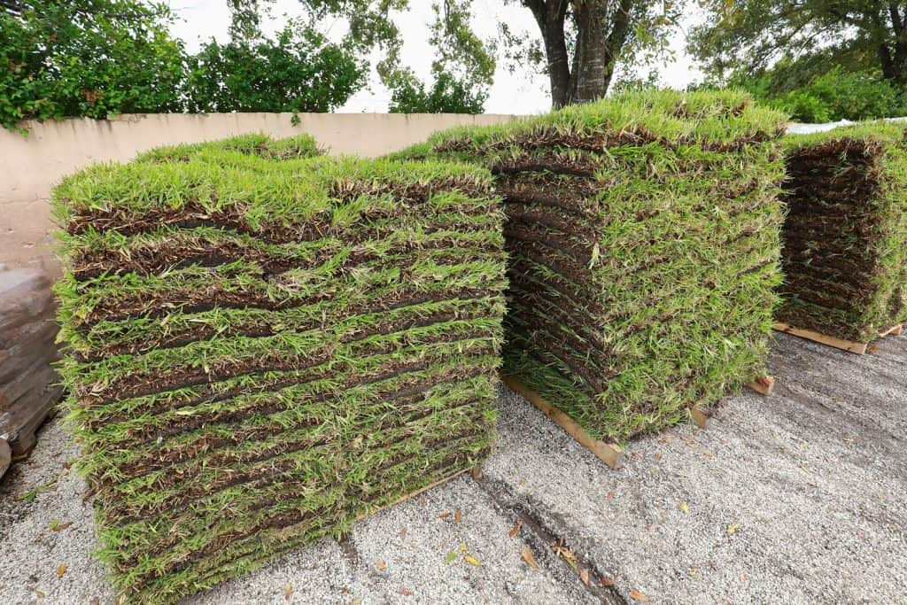 Pallets of St. Augustine grass ready for resale