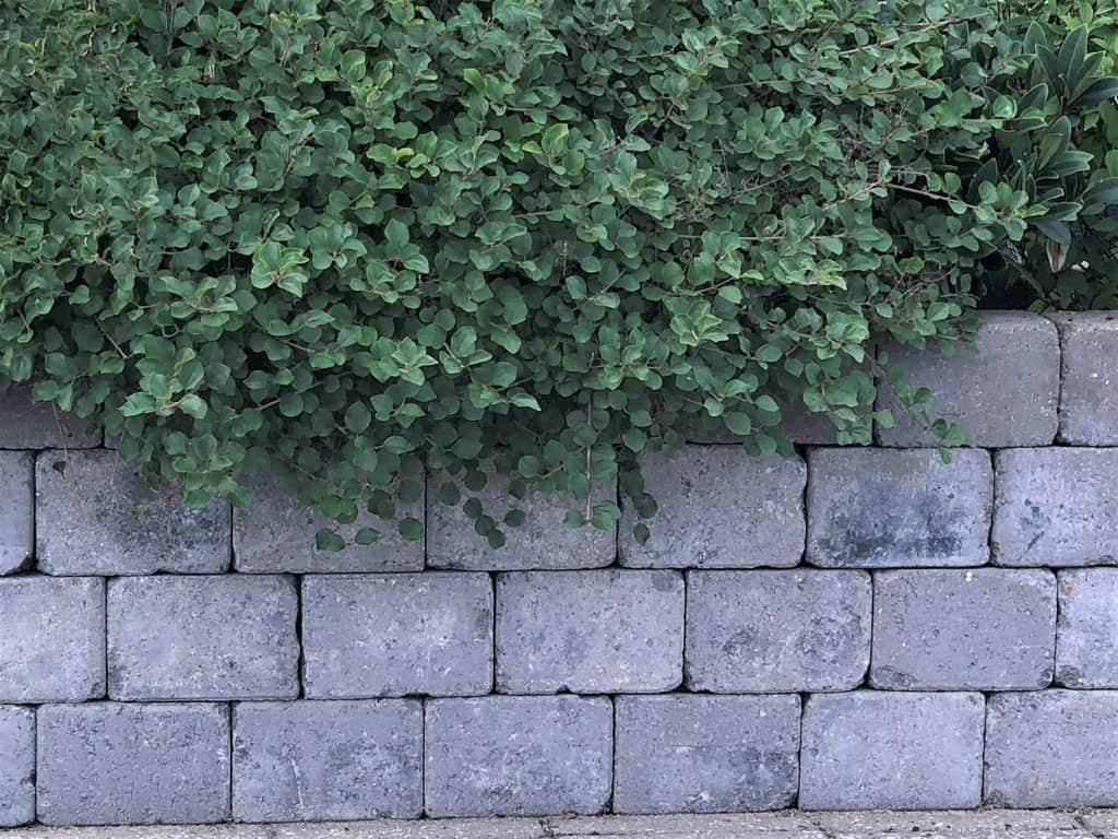 Retaining wall with concrete blocks
