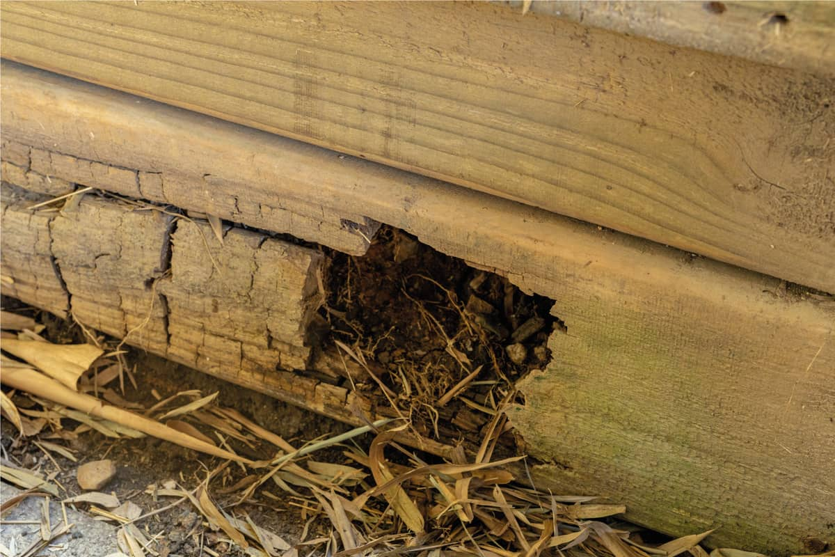 Rotting Timber Retaining Wall After Water Damage