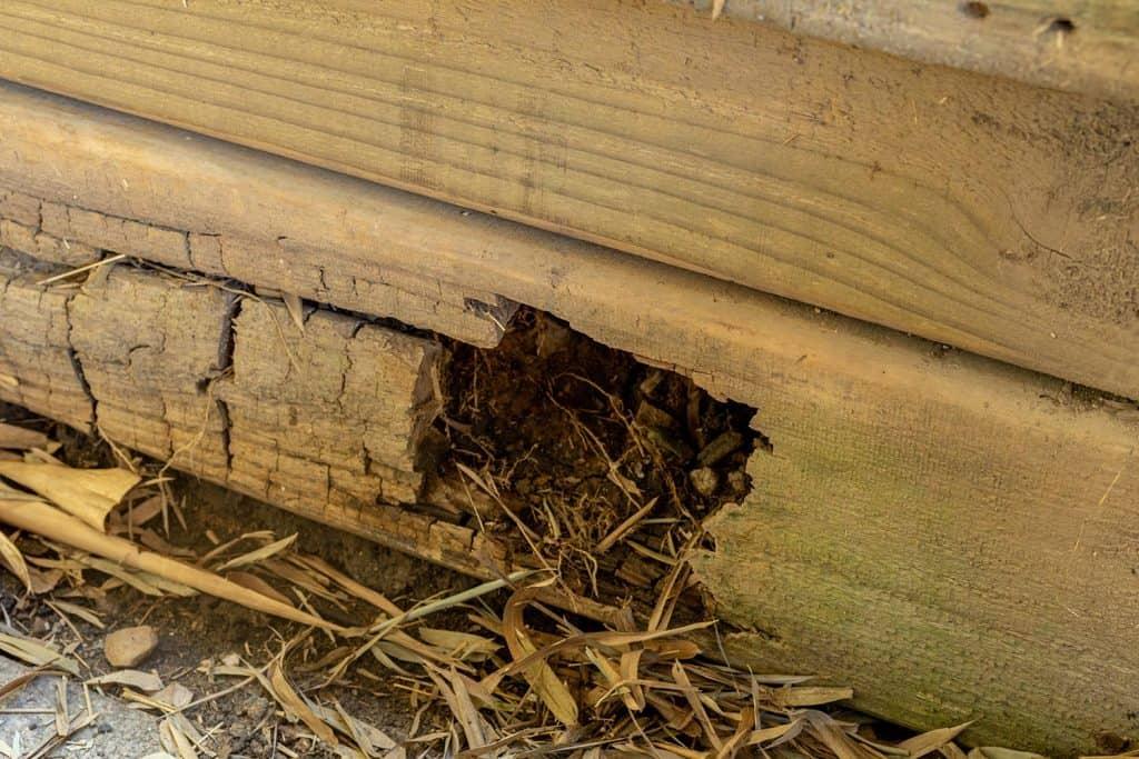 Rotting timber retaining wall
