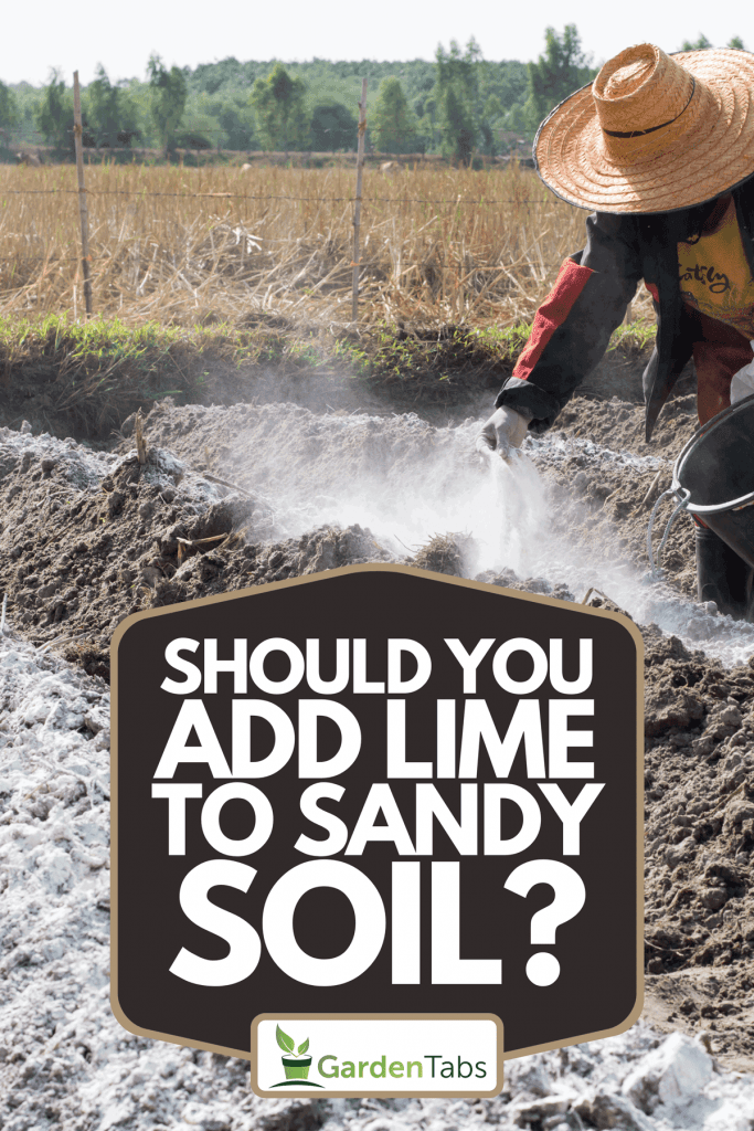 A farmer putting lime to soil, Should You Add Lime To Sandy Soil?
