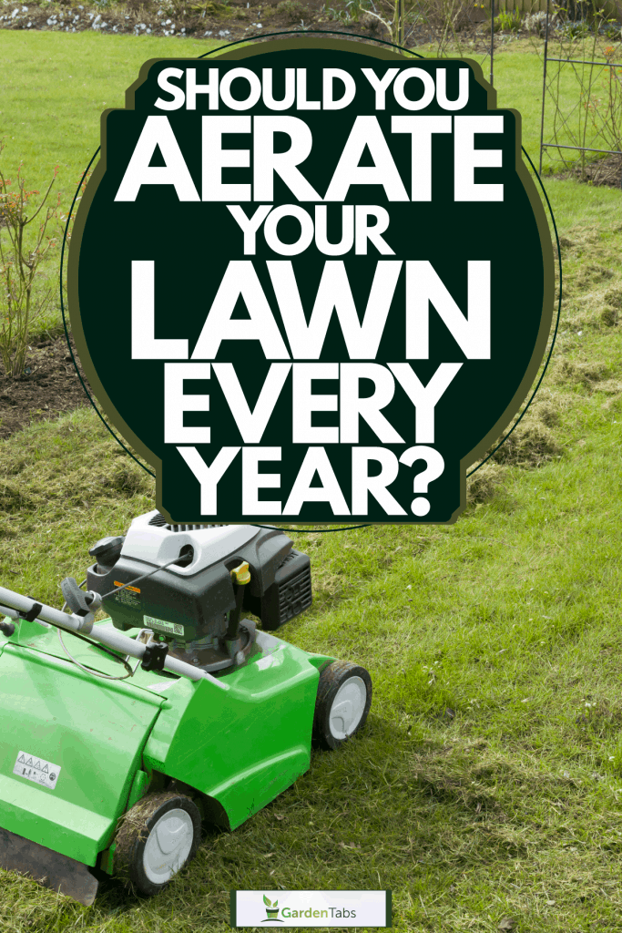 A man scarifying his lawn, Should You Aerate Your Lawn Every Year?