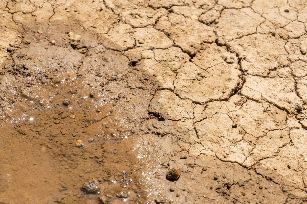 The last puddle that remained in the dry ground