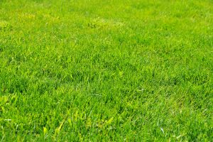 Read more about the article What Are The Best And Worst Types Of Soil For St Augustine Grass?