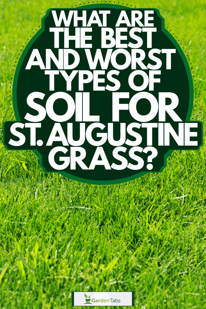 Up close photographed of healthy St. Augustine grass, What Are The Best And Worst Types Of Soil For St Augustine Grass?