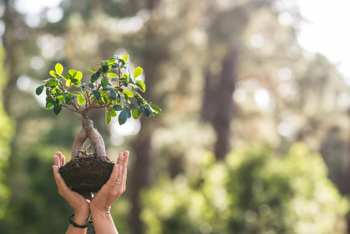 a hand holding a bonsai plant