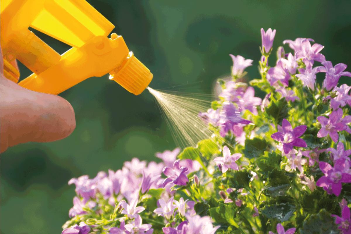 liquid fertilizer being sprayed unto flowers