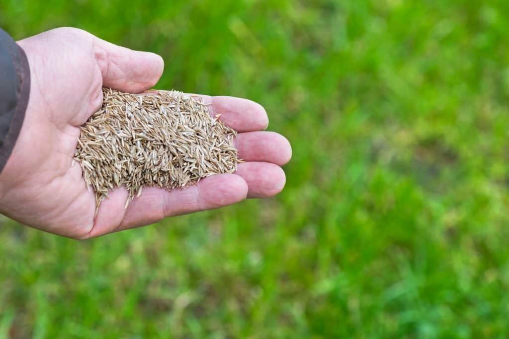 A man holding a pile of grass seeds