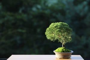 Read more about the article How To Keep Bonsai Leaves Small