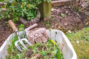 Read more about the article How To Keep Weeds Out Of Your Garden