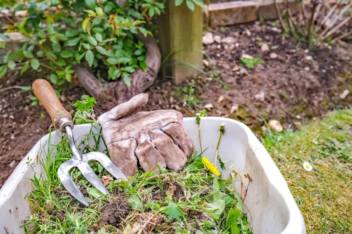 Garden weeds in a plastic tub with gardening glove and fork in a rural garden, How To Keep Weeds Out Of Your Garden