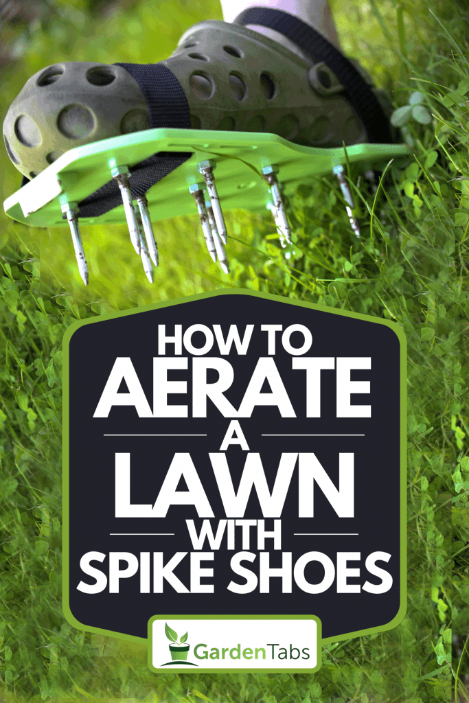 A garden aerator with spikes on the feet on a green lawn, How To Aerate A Lawn With Spike Shoes