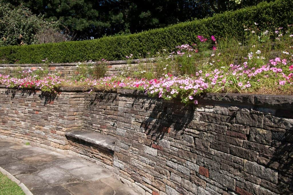 Retaining wall with bench topped with flowering petunia's in garden