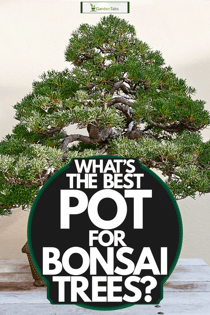 An old and gorgeous bonsai tree planted in a rectangular clay pot, What's The Best Pot For Bonsai Trees? [Inc. 11 Perfect Examples]